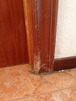 Presupuesto para reparar marcos puerta y rodapi s mordidos - Reparar madera ...